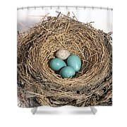 Robins Nest And Cowbird Egg Shower Curtain