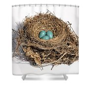 Robins Nest With Eggs Shower Curtain