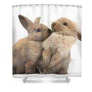 Sandy Rabbits Sharing Grass Shower Curtain