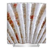 Seashell Surface Shower Curtain by Elena Elisseeva