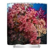 Soft Coral In Raja Ampat, Indonesia Shower Curtain
