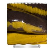 Southeast Asian Caecilian Shower Curtain
