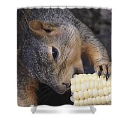 Squirrel Eating Sweet Corn  Shower Curtain