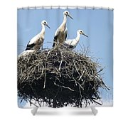 3 Storks In The Nest. Lithuania Shower Curtain