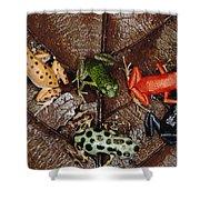 Strawberry Poison Dart Frog Dendrobates Shower Curtain
