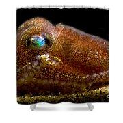 Stubby Squid Shower Curtain
