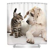 Tabby Kitten & Great Dane Pup Shower Curtain
