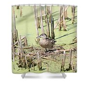 Teal Duck Shower Curtain