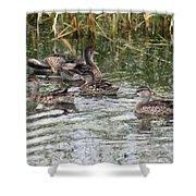 Teal Ducks Shower Curtain