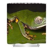 Tiger Stripe Monkey Frog Shower Curtain