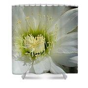 White Cactus Flower Shower Curtain