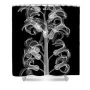 X-ray Of Hyacinth Shower Curtain