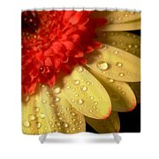 3096 Shower Curtain