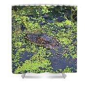 31- Alligator Hatchling Shower Curtain