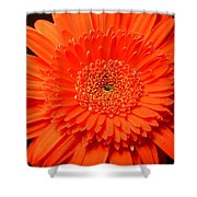 3289c Shower Curtain