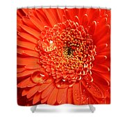 3302-001 Shower Curtain