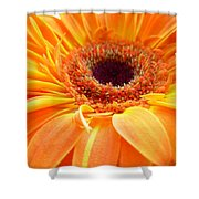 3417 Shower Curtain