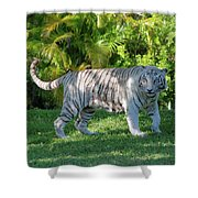 35- White Bengal Tiger Shower Curtain