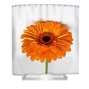 3527 Shower Curtain