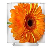3529-001 Shower Curtain