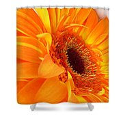 3562-004 Shower Curtain