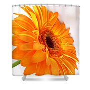 3562 Shower Curtain