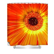 3943 Shower Curtain