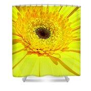 3957-001 Shower Curtain