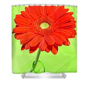 3997-001 Shower Curtain