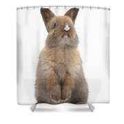 Baby Rabbit Shower Curtain