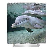 Bottlenose Dolphin Underwater Pair Shower Curtain