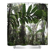 Bromeliad Bromeliaceae And Tree Fern Shower Curtain by Cyril Ruoso