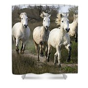 Camargue Horse Equus Caballus Group Shower Curtain
