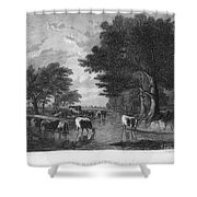 Cattle, 19th Century Shower Curtain