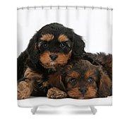 Cavapoo Pups Shower Curtain