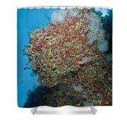 Colourful Reef Scene, Ari And Male Shower Curtain