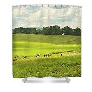 Cows Grazing On Grass In Farm Field Summer Maine Shower Curtain