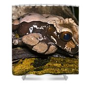 Crowned Tree Frog Shower Curtain