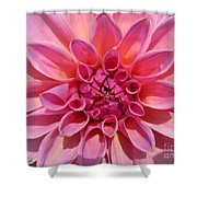Dahlia Named Lucky Number Shower Curtain