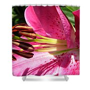 Dwarf Oriental Lily Named Farolito Shower Curtain