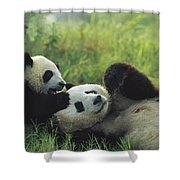 Giant Panda Ailuropoda Melanoleuca Shower Curtain