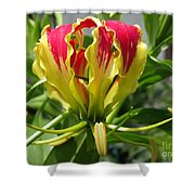Gloriosa Named Rothschildiana Shower Curtain