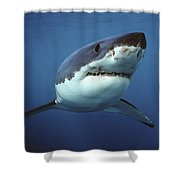 Great White Shark Carcharodon Shower Curtain