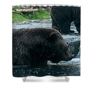Grizzly Bear Or Brown Bear Shower Curtain