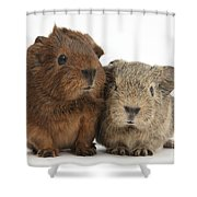 Guinea Pigs Shower Curtain