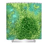 Hepatitis B Tem Shower Curtain