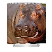 Hippopotamus Hippopotamus Amphibius Shower Curtain by Gerry Ellis