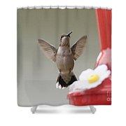Hummingbird Shower Curtain