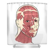 Illustration Of Facial Muscles Shower Curtain