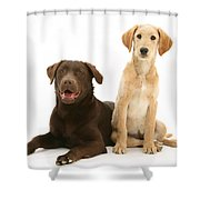 Labradoodle And Labrador Retriever Shower Curtain by Jane Burton